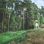 Täby hunddagis har tre rasthagar på en 10000 kvm tomt