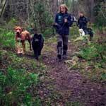 Ute på hundprommenad med småhundsgrupp från täby hunddagis