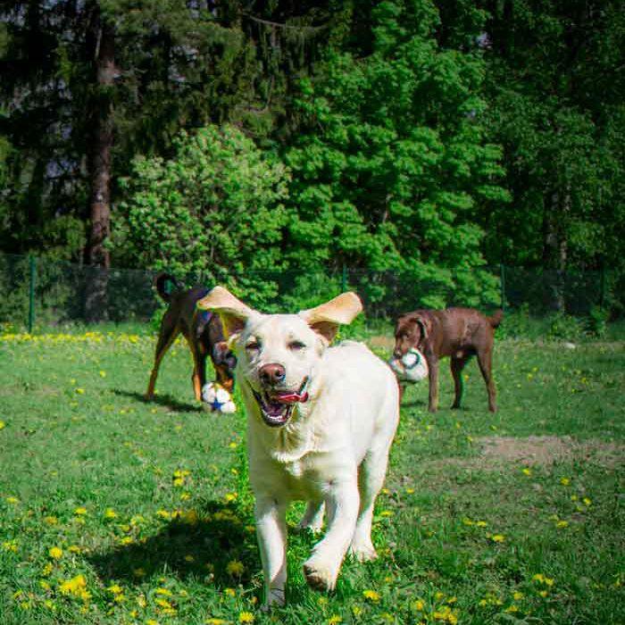 Flera rasthagar på Täby hundagis