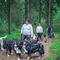 träning med hundar
