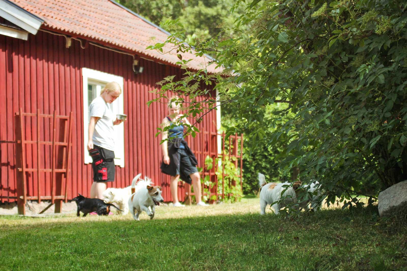 Småhundsgrupp på Täby hunddagis - Changdobels