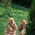 hundkompisar på hundhotell