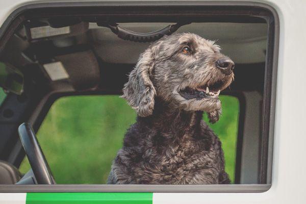 Hämtning och lämning hundpensionat