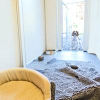 Eget rum med egen utegård. Täby hundpensionat 4