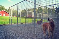 Täby Hundpensionat, egen gård intil rum