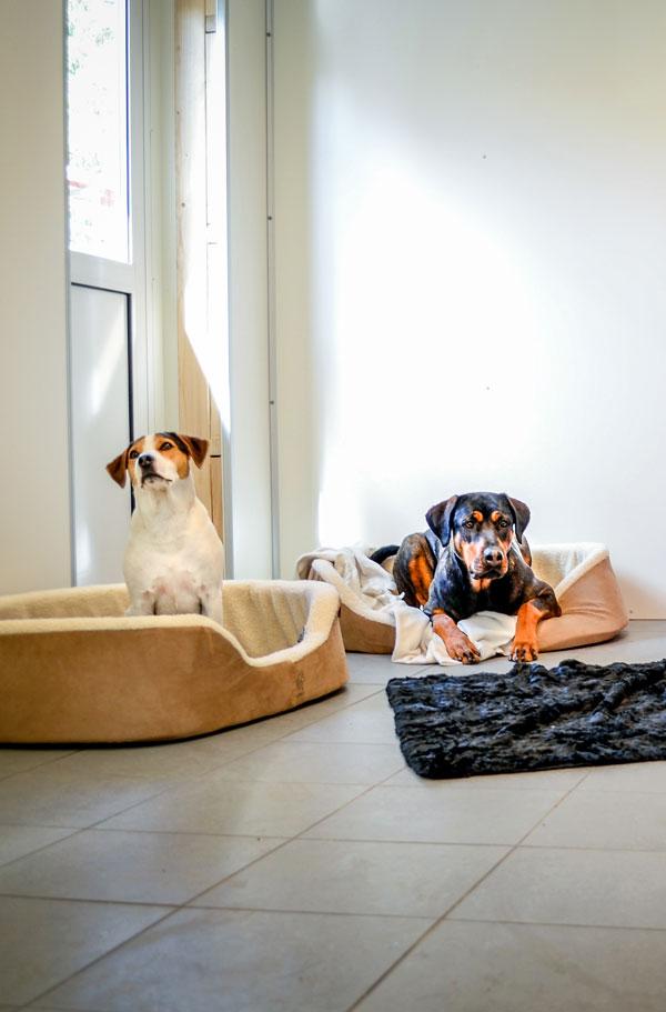 Täby Hundpensionat rum