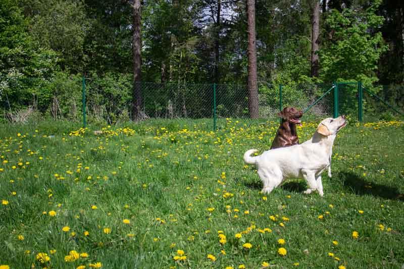 Changdobels Täby Hundpensionat