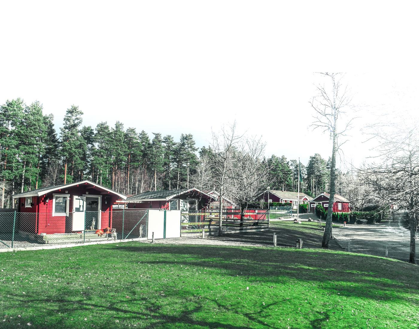 professionell vuxen liten nära Stockholm