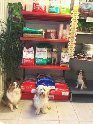 Nu har vi äntligen fått in Royal Canin på Changdobels!